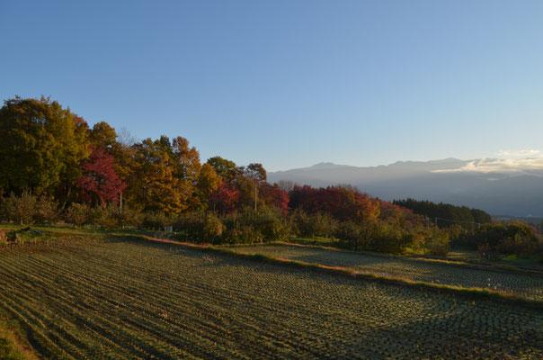 里の紅葉が盛りとなりました