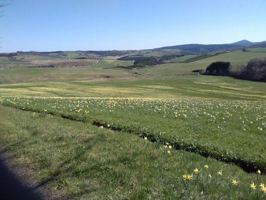 Les fleurs du plateau ardéchois - Cros de Géorand (Caroline)