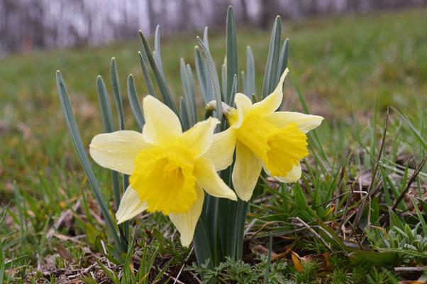 Les fleurs du plateau ardéchois - Cros de Géorand (Faustine)