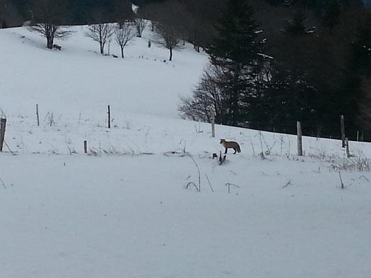 L'hiver à Cros de Géorand (Céline)