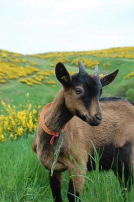 Le printemps à Cros de Géorand (Cathy)