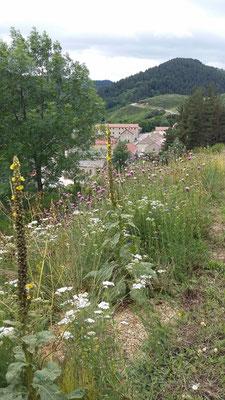 Les fleurs du plateau ardéchois - Cros de Géorand (Françoise)