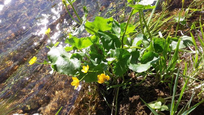 Les fleurs du plateau ardéchois - Cros de Géorand (Manon)