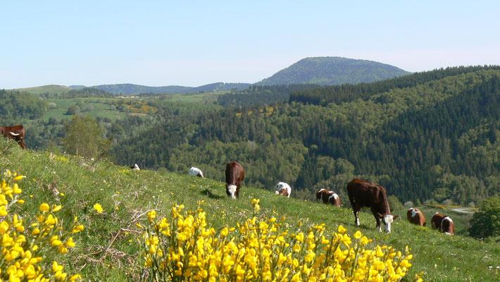Le printemps à Cros de Géorand (Denis)