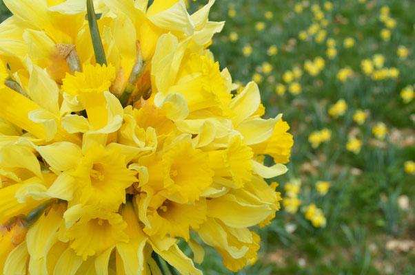 Le printemps à Cros de Géorand (Audrey)