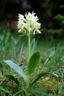 Les fleurs du plateau ardéchois - Cros de Géorand (David)