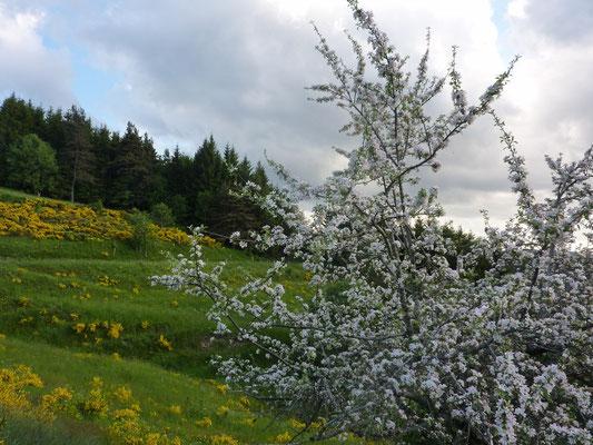 Le printemps à Cros de Géorand (Cécile)