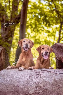 Age und Bruder Ben im Wald