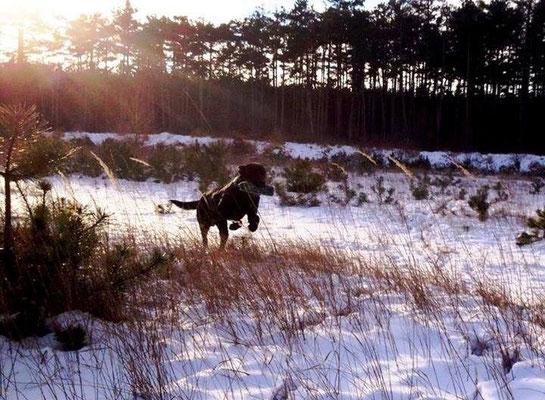 Dexter Birchgrove im Schnee