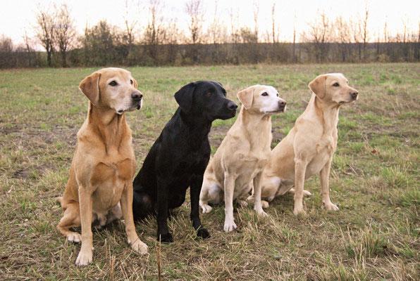 Age, Dexter, Kate und Berry