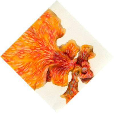 """"""" a perfumed bath -corona#04""""  H150×W150mm  2007"""