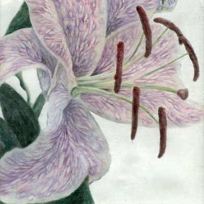 """ Dear Lily ""  H280×W280mm  2007"