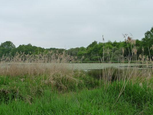 Réserve Naturelle, de Brenne