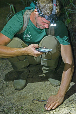 Dick met Helicops angulatus