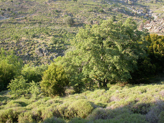 uitzicht noordkant Lesbos