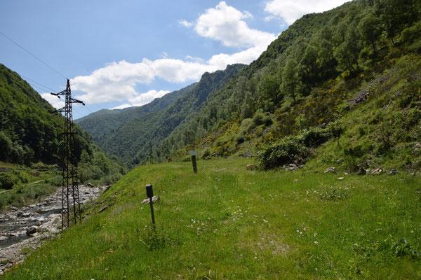 biotoop wat lager op de berg