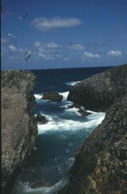 Kust van Coffs Harbour