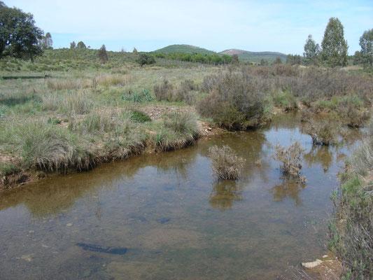 waterrijk gebied