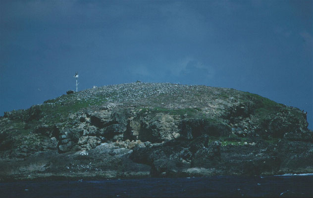 Rotseiland met paartje albatros