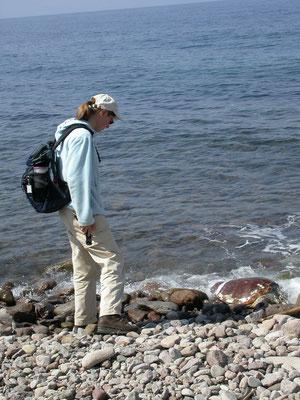Marlies bij dikkopschildpad
