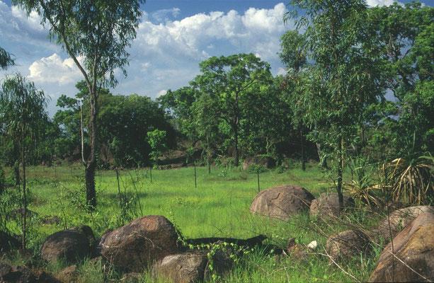 landschap met termietenheuvels
