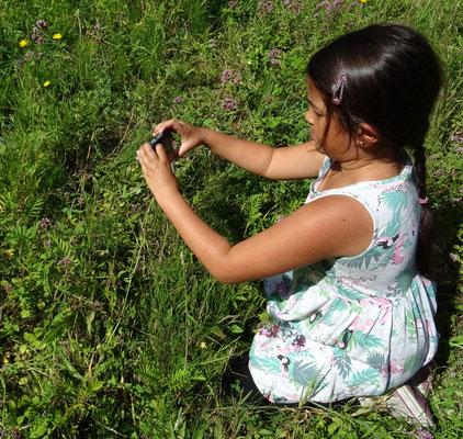 Rashmi fotografeert dwergblauwtje
