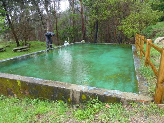 oud zwembad met Lissotritron boscai