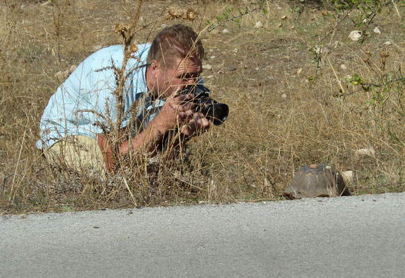 Marcel efotografeert klokschildpad (Testudo marginata)