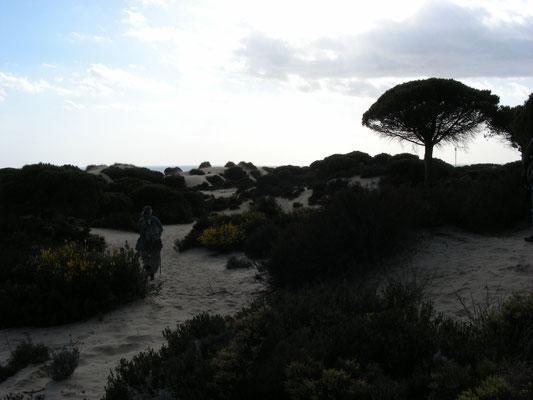 duinen nabij Mazagon