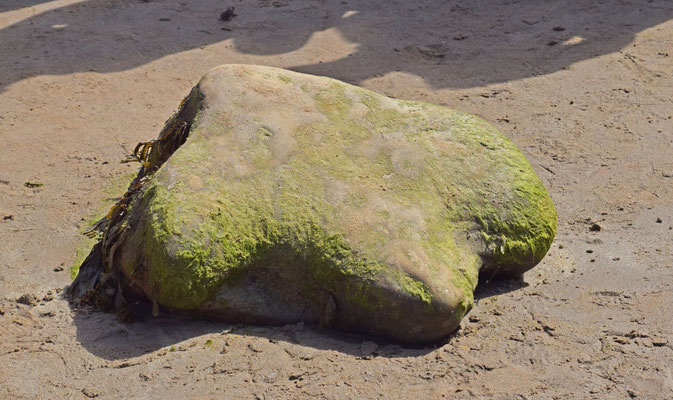 Pootafdruk van Iguanodon