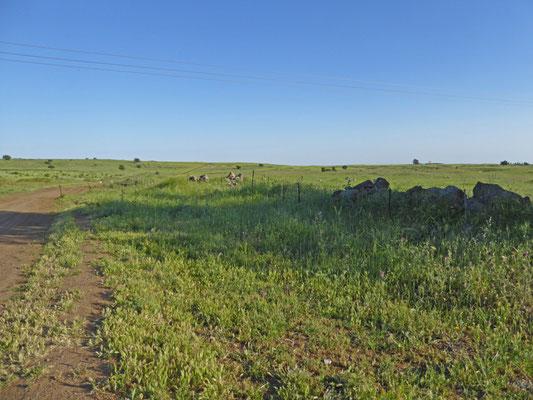 gebied omgeving Ortal