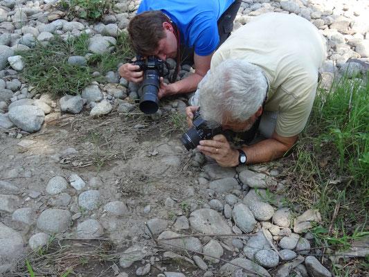 fotograferen Dobbelsteenslang, foto Anton