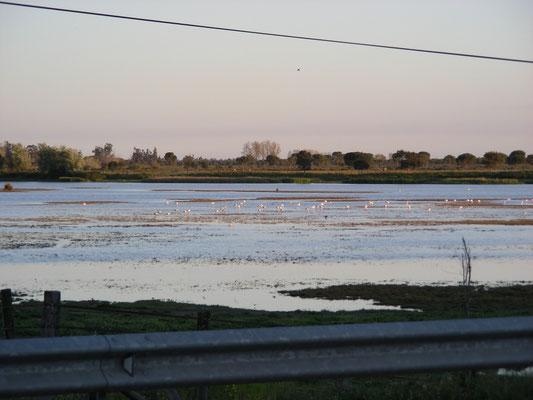 Cota Donana met Europese flamingo's