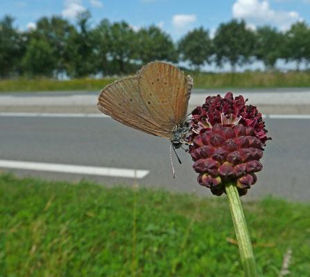 Roerdal, Zuid-Limburg