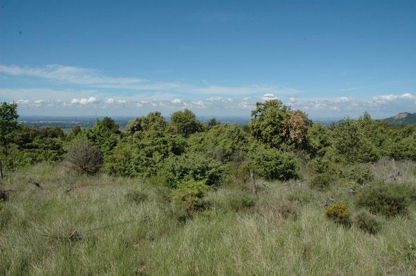 landschap nabijheid Mont Ventoux