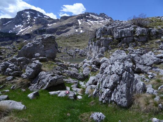 Durmitor NP, locatie Mosor berghagedis