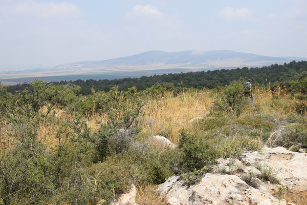 succesvolle weide op Mount Gliboa
