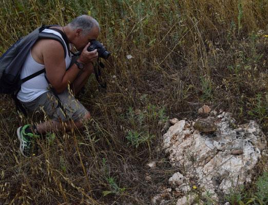 Jur fotografeert Moorse landschildpad