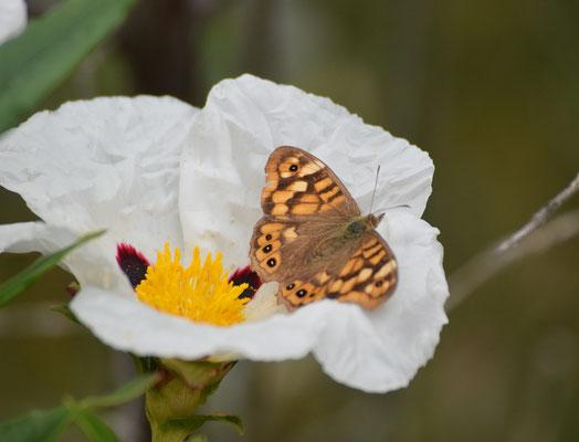 ssp aegeria, Zuid Portugal