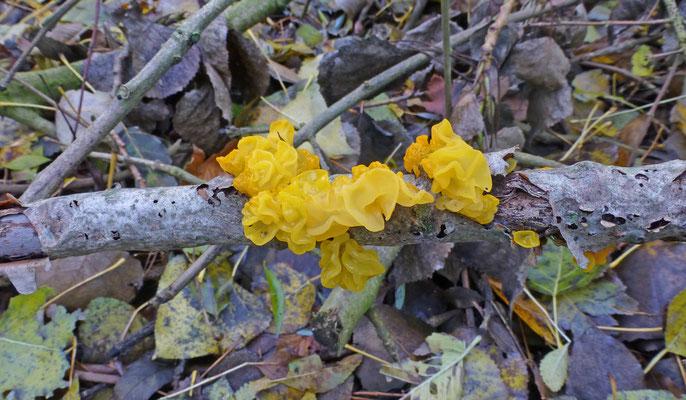 Tremella mesenterica - Gele trilzwam