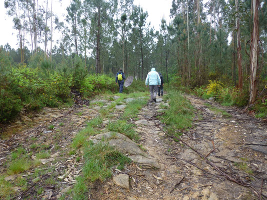 bij het Eucalyptus beekbos