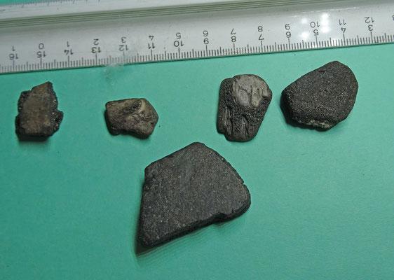 stukjes schild van een schildpad