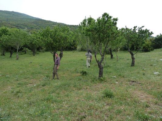 landschap nabij Kato, zou goed zijn voor luipaardslang (Zamenis situla)