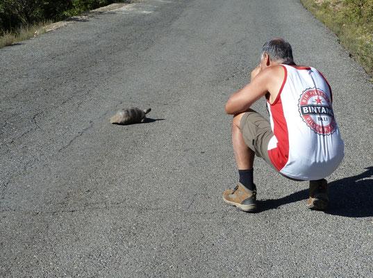Jur fotografeert klokschildpad (Testudo marginata)