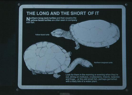 2 voorkomende schildpadden