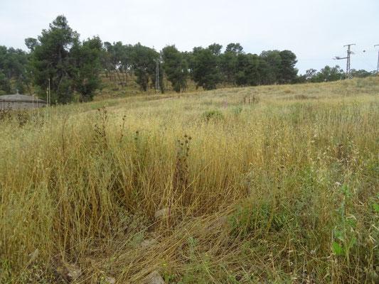 Weide aan oostzijde Mount Gilboa