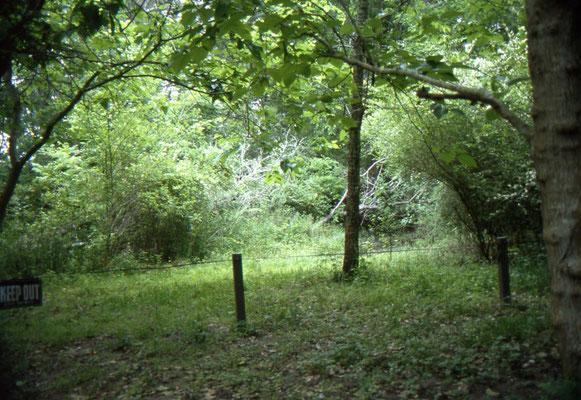 Audubon Woods