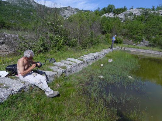 Ruud bij het bassin van de Macedonische kamsalamander