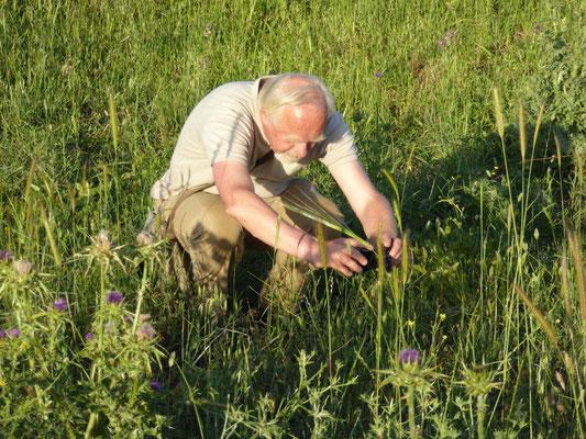 Anton fotografeert soort Phegeavlinder