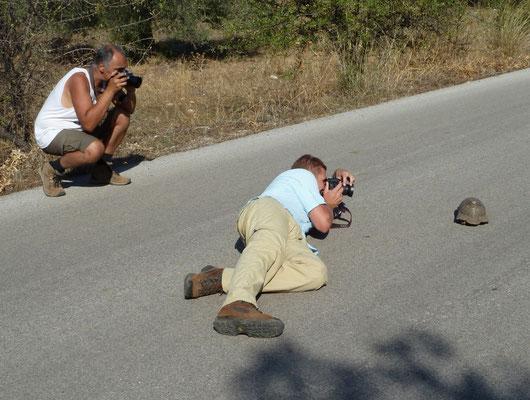 Marcel en Ruud fotograferen klokschildpad (Testudo marginata)